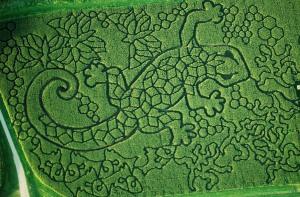 Treinen Farm Gecko Corn Maze