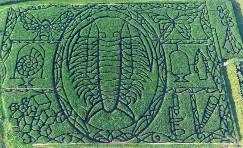 Giant trilobite crashes Wisconsin corn field